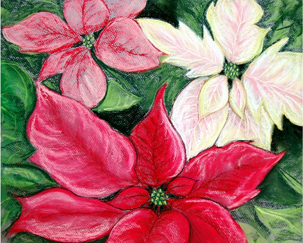 Pastel drawing of Poinsettia flowers