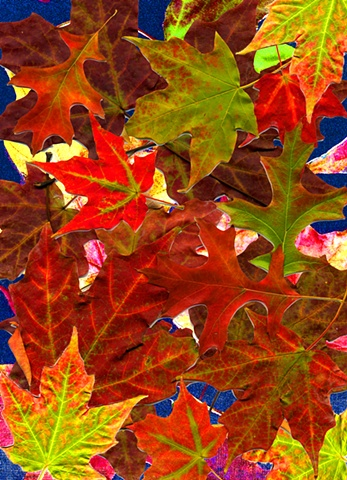 Colorful Leaves, Autumn, collage, Fall, seasonal,