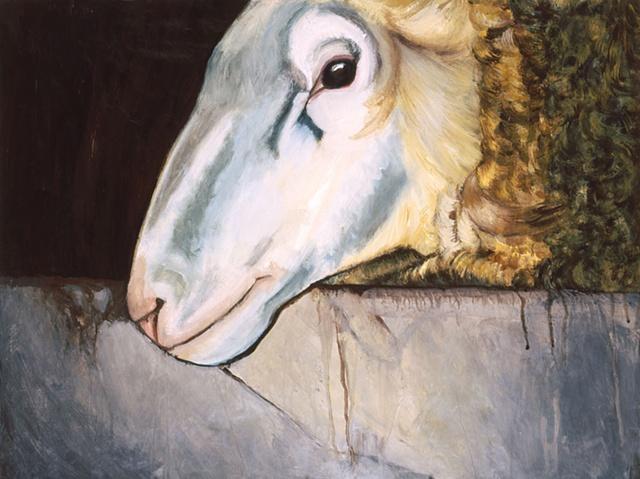 Profile of a Male Sheep