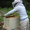 Deb working the hive.