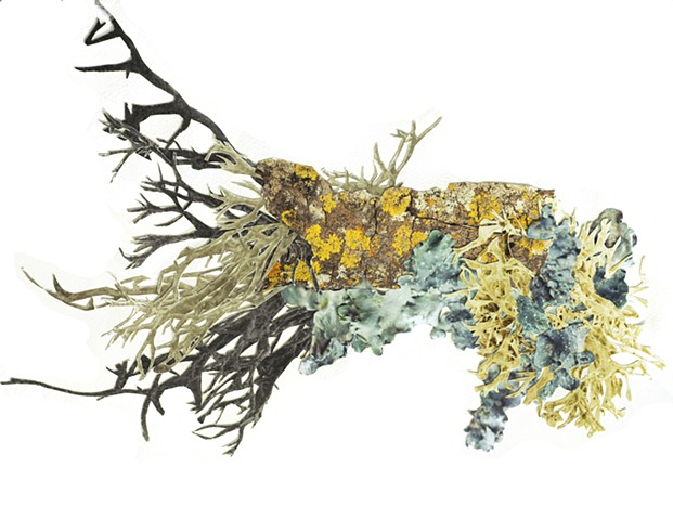 Lichen Colony, Branch