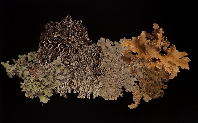 Artificial Lichen Colony 09