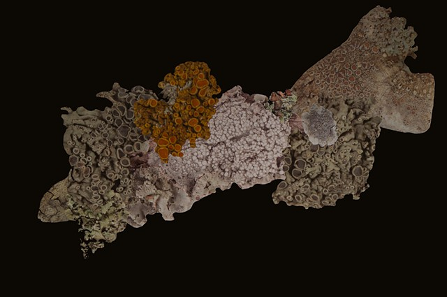 Artificial Lichen Colony 14