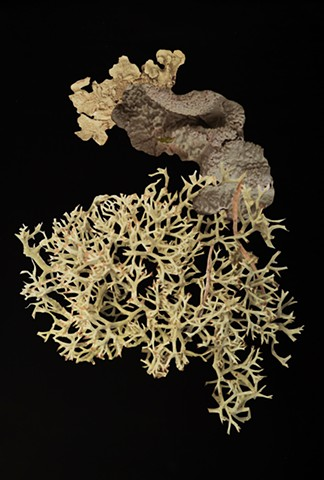 Artificial Lichen Colony 07