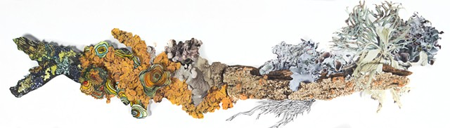 Lichen Collage