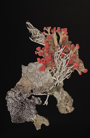 Artificial Lichen Colony 02