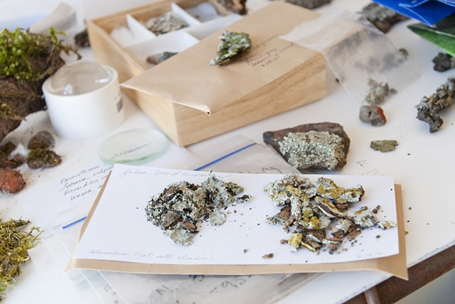 Lichen collection in studio