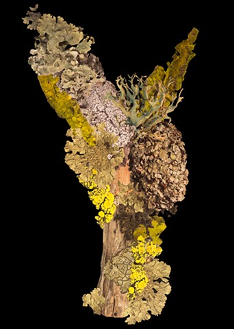Artificial Lichen Colony 12