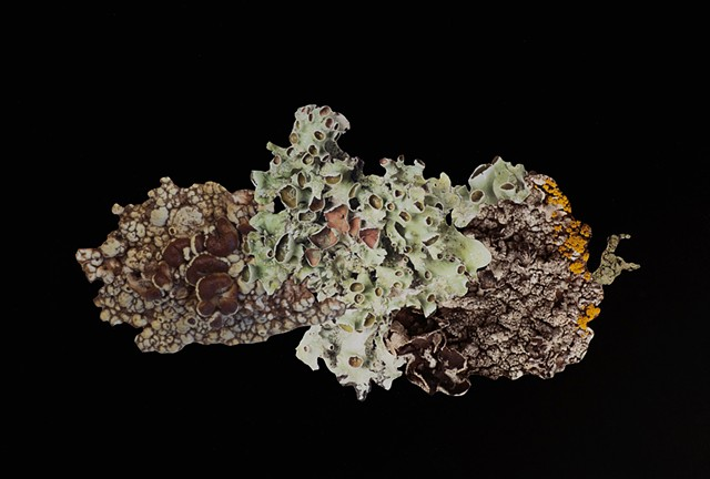 Artificial Lichen Colony 13