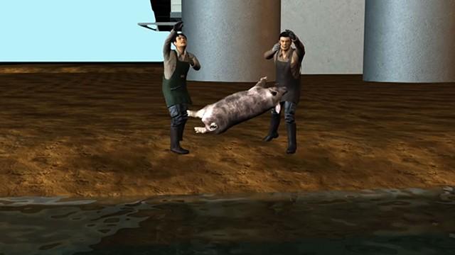 The Porcine Dilemma