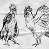 rooster sketch #1
