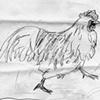 rooster sketch #4