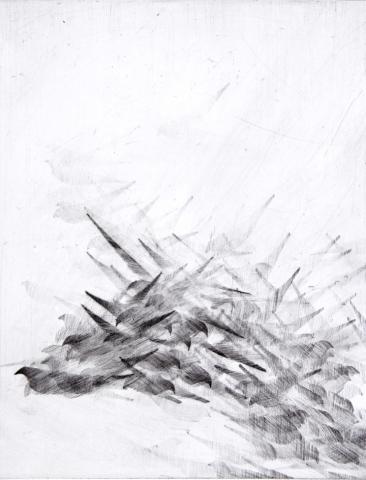 Pigeon Series Etching #3
