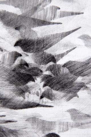 Detail Pigeon Series Etching #2