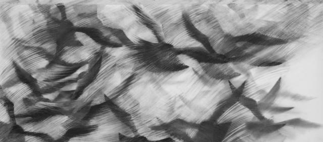 Pigeon Series Drawing #11