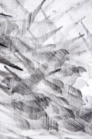 Detail Pigeon Series Etching #3