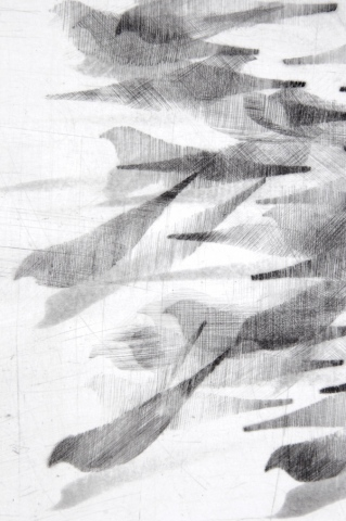 Detail Pigeon Series Etching #4