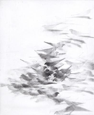 Pigeon Series Etching #2