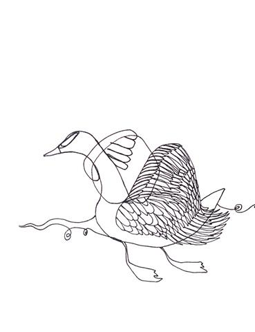 Prospect Park Swan