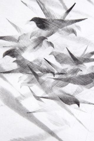 Detail Pigeon Series Etching #6