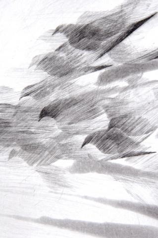Detail Pigeon Series Etching #5