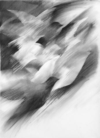Pigeon Series Drawing #9