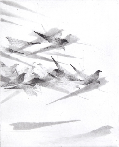 Pigeon Series Etching #1