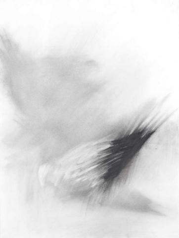 Pigeon Series Drawing #2