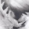 Pigeon Series Gesso Drawing  #1