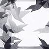 Pigeon Series Installation