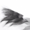 Pigeon Series Drawing #6