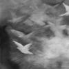 Pigeon Series Gesso Drawing #7