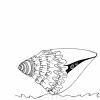 Hide Conch