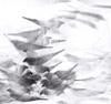 Pigeon Series Etchings