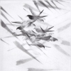Pigeon Series Etching #6