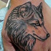 Wolf Cover-up