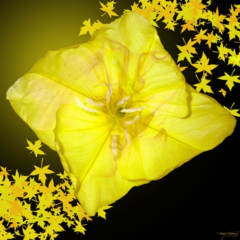 Fleurotica art, nude art, nude couple art, fower art, floral art, Primrose art, yellow art, sensual art, sensuous art, unique art, fantasy art, romantic art, beautiful art, photographic art, digital art, digital collage art, digital painting
