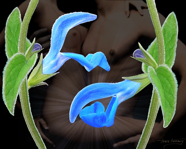 Fleurotica art, nude art, nude couple art,flower art, floral art, flower art, blue art, sensual art, sensuous art, unique art, fantasy art, romantic art, beautiful art, photographic art, digital art, digital collage art, digital painting