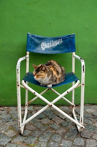 Quilmes Gato