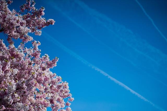 Cherry Blossom & Sky ~ Washington, D.C.
