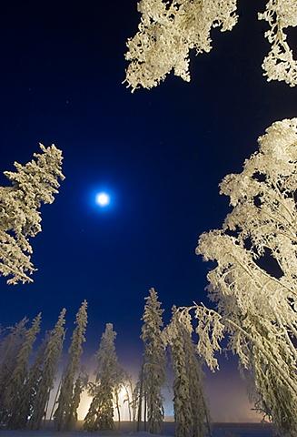 forty below, fairbanks, alaska