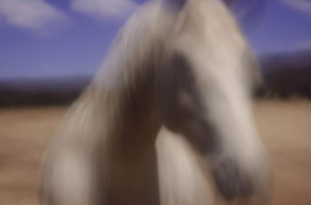 White Horse, Black Horse Mimbres Valley, New Mexico