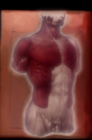 """Thoracic and Abdominal Muscles 2014 zone plate photograph archival pigment print 20""""x13"""" from """"The Atlas of Human Anatomy"""" by J. M Bourgery and N. H. Jacob, 1832-1854"""