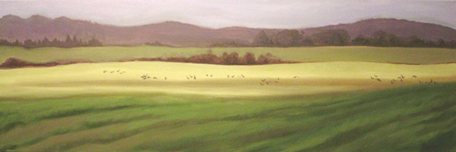 Geese in a Field- Deerfield Road