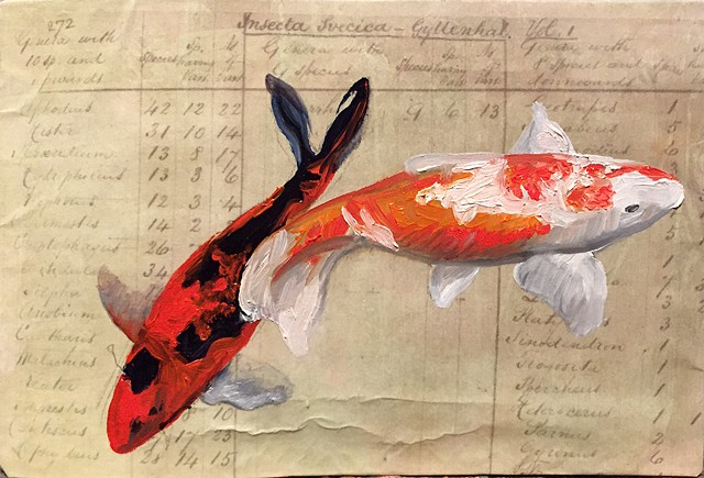 koi fish painted on Darwin's Lists of Species