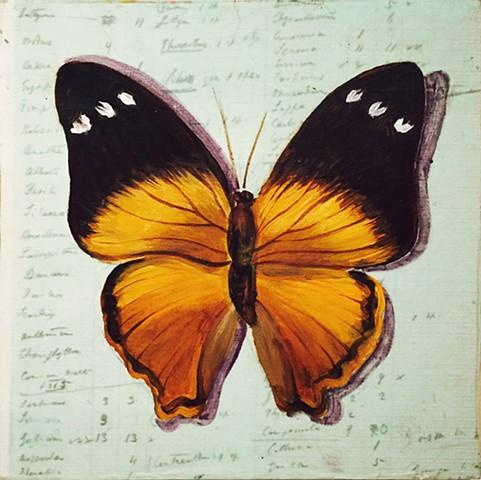 painted on printed paper - Darwin's List of Species
