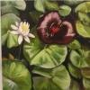 Red Lilypad at Innisfree Gardens