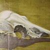 Fawn Skull