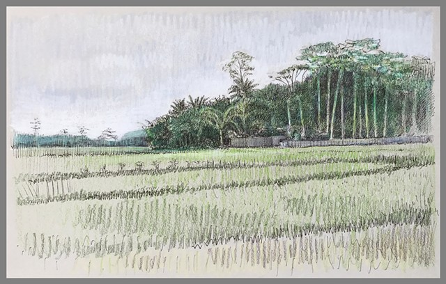 Travel Drawing: Rice Fields near Borobudur, Java, Indonesia