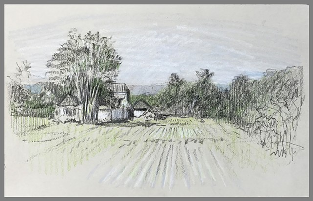 Travel Drawing: Rice Fields at Yabbiekayu Bungalows, Yogyakarta, Java, Indonesia